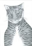 Tiger_480x679